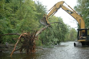 Big tree - for Twin Rivers project